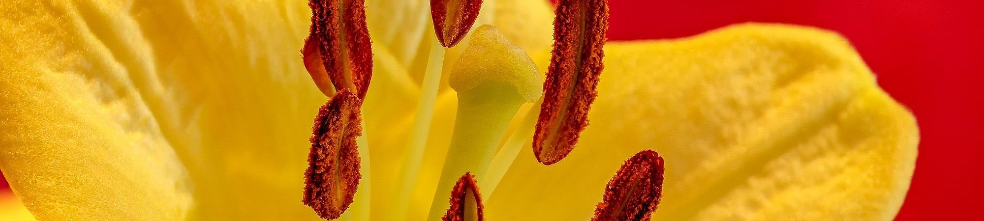 Macro in Red and Yellow photography