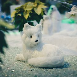 Lone Snow Fox photography